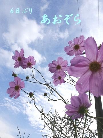 コスモス空.jpg
