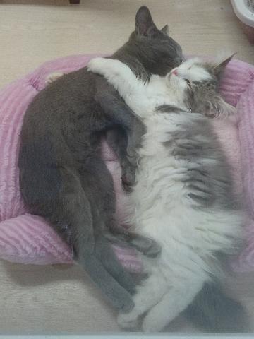 抱っこネコ2.jpg