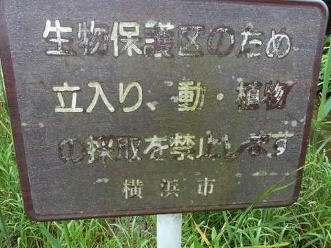 横浜市.jpg
